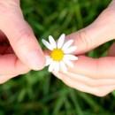 picking-daisies